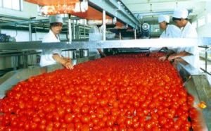 Tomato Paste 36-38% in Big Drums