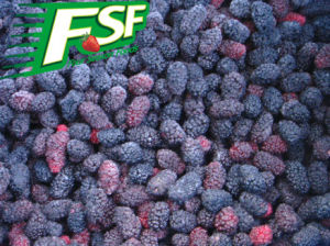 IQF Mulberries