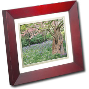 8 Inch Digital Photo Frame (CL-DPF0800J)