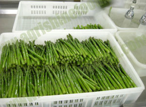IQF/Frozen Green Asparagus (01) pictures & photos