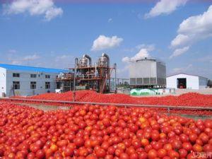 Cold Break Tomato Paste