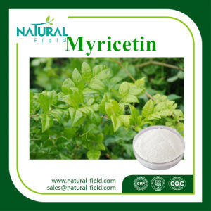 Factory Supply Vine Tea Extract Myricetin / CAS:   529-44-2    pictures & photos