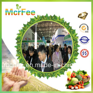 China High Quality Map 12-61-0 Monoammonium Phosphate pictures & photos