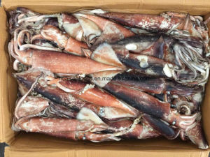Frozen Pacific Squid for Sale pictures & photos