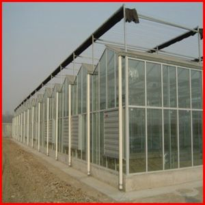 China Agriculture Multi-Span Polycarbonate Sheet Greenhouse for Vegetables pictures & photos