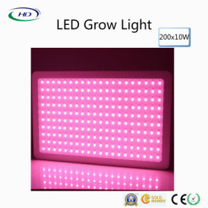 200PCS*10W High Lumens LED Grow Light for Indoor Plant pictures & photos