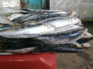 7-8PCS/Kg Frozen Sardine for Bait Sardine Fish pictures & photos