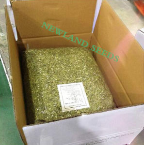 Shine Skin Pumpkin Seeds Kernels Grade AA From Inner Mongolia China pictures & photos
