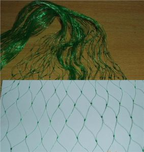 Light Weight Anti Bird Netting (Protect Grape Plants, HDPE100%) pictures & photos