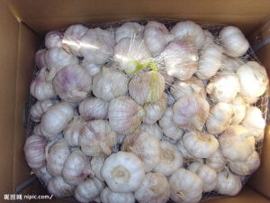 Small Mesh Bag Packing Garlic pictures & photos