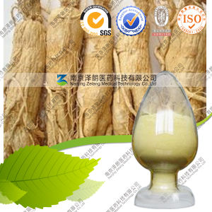 Low Pesticide FDA Registed Ginseng Panax Extract pictures & photos