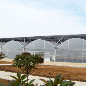 Large 10 Meters Plastic Film Greenhouse, Vegetables Greenhouse pictures & photos