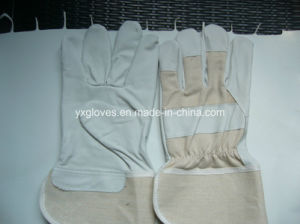 Safety Glove-Leather Glove-Working Glove-Labor Glove-Cheap Glove pictures & photos