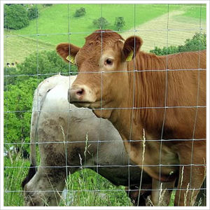 Premium Cattle Farm Fence/Field Fence/Grassland Fence pictures & photos