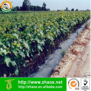 High Quality PE Plastic Black Agricultural Film with UV Resistant pictures & photos