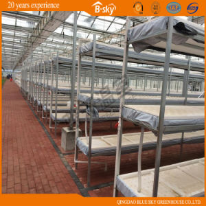 Po Film Greenhouse with Multi-Span Structure pictures & photos