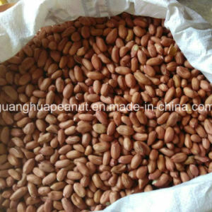 Hot Sale Jumbo Peanut Kernels From China pictures & photos