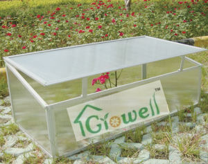 Cold Frame Greenhouse for Young Plants (C201) pictures & photos