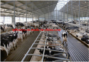 Made in China Steel Structure Cowshed (SSA-001) pictures & photos