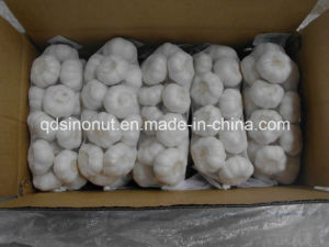New Crop Pure White Garlic (800gx10/CTN) pictures & photos