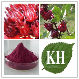 Roselle Extract, Hibiscus Sabdariffa Extract, Karkade Extract CAS No.: 71149-61-6. pictures & photos