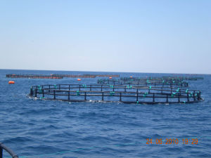 HDPE Round Farming Aquaculture Fish Cages pictures & photos