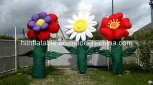 Wedding Party Flower/Automatically Open Inflatable Wedding Flowers Decoration pictures & photos