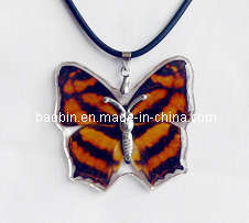 Fashion Jewelry -Real Butterfly Necklace (DC07)