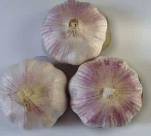 2017 Fresh Purple Garlic in China pictures & photos