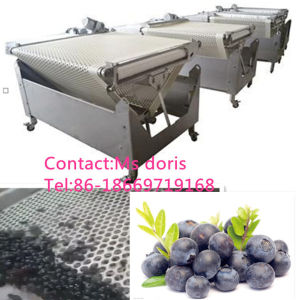 Apple Fruit Sorting Machine/Cherry Sorting Machine / Fruit Grader pictures & photos