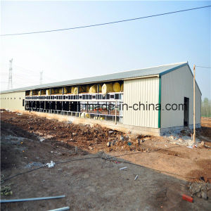 Prefab Poultry Barn with Full Set Automated Poultry Equipment pictures & photos