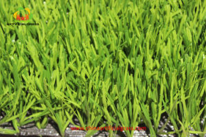 Football Grass Excellent Supplier Direct From Manufacturer pictures & photos