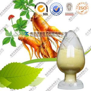 Powdered Asian Ginseng Extract Best Ginseng Extract