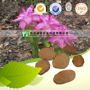 100% Pure Natural Herb Medicine Curcuma Zedoaria E Zhu pictures & photos