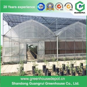 Best Selling Single-Span Film Green House Greenhouse in Plastic Film pictures & photos