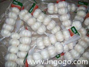 New Crop Fresh Good Quality Export White Garlic pictures & photos