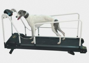 HD-980 High Quality Dog Treadmill pictures & photos
