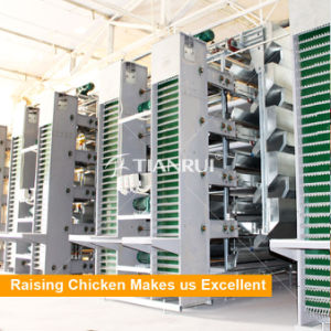 Tianrui Hot Selling Automatic Chicken Egg Collecting System pictures & photos
