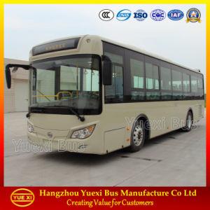Hot Sale 8 - 10 Meter City Bus (6105)