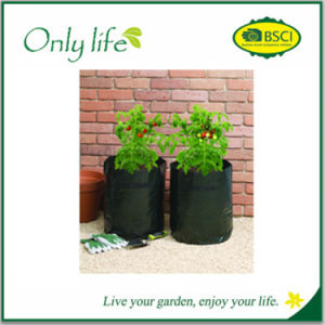 Environment Friendly Grow in Small Urban Spaces Garden Grow Bag pictures & photos