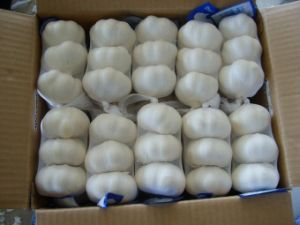 Chinese Good Quality Pure White Garlic pictures & photos