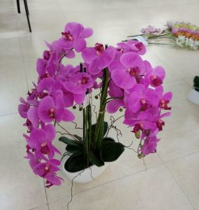 Best Selling 2heads Orchid Flower Gu-Jy902123307 pictures & photos