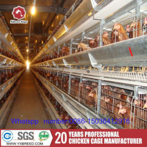 Silver Star Chicken Layer for Poultry Farm pictures & photos
