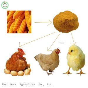 60% Yellow Corn Gluten Meal Protein Powder Chicken Food pictures & photos