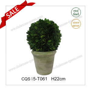 H22cm Tree/Ball Plant Type and Natural Leaves Artificial Plant pictures & photos