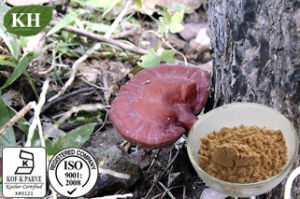 Pure Natural Reishi Mushroom Extract 10%-30% Polysaccharides pictures & photos