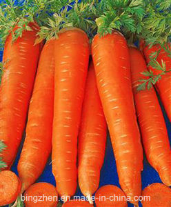 2017 New Crop Fresh Carrot at The Best Quality & Price pictures & photos
