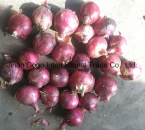 100% New Crop Export Good Quality Red Onion pictures & photos
