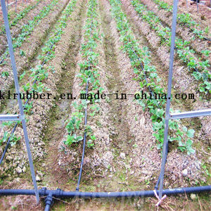 Water Saving Drip Irrigation Tape for Green House pictures & photos