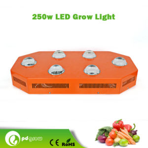 High Intensity and Full Spectrum 250W LED Grow Light for Indoor Growing